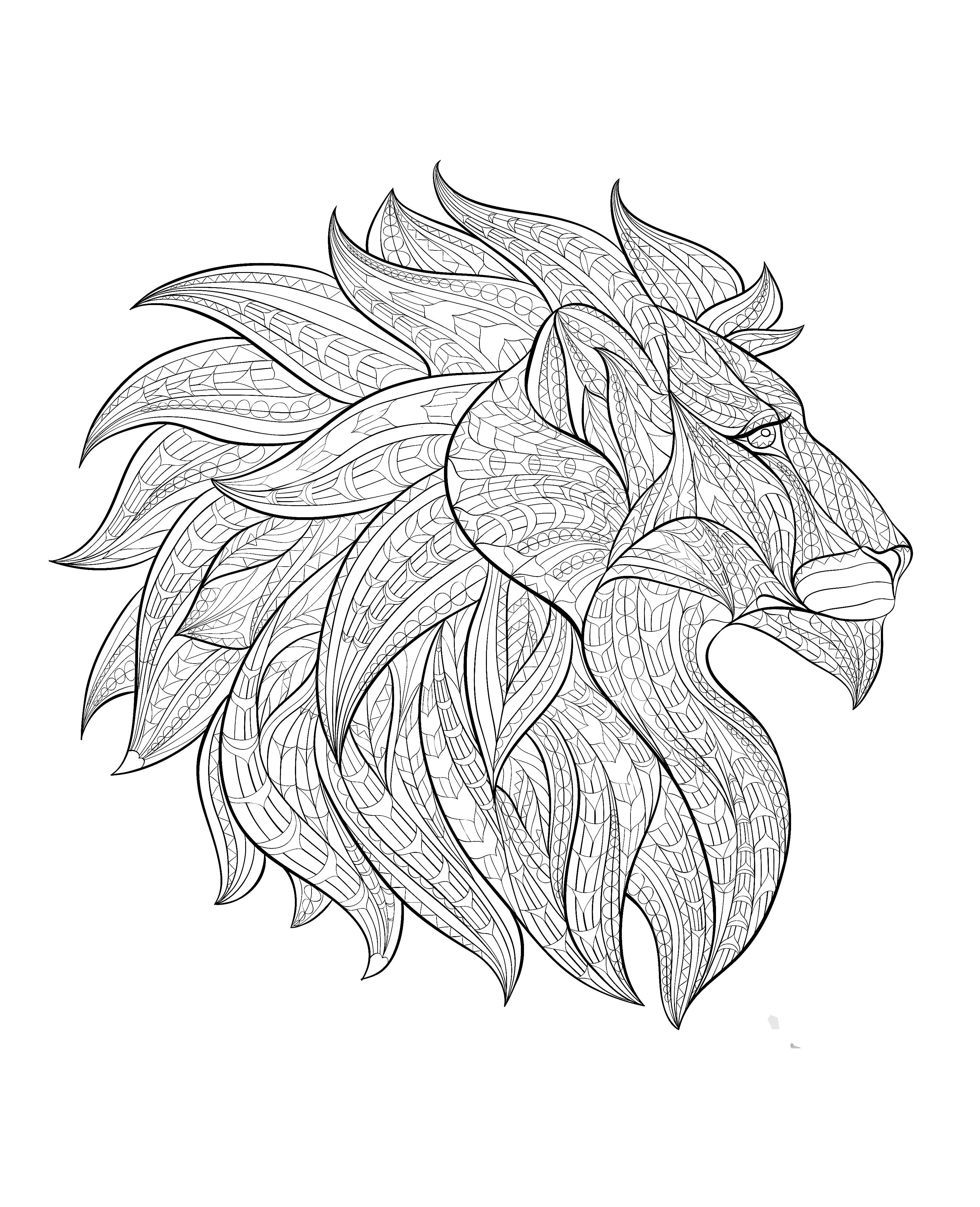Afrique tete lion profilA partir de la galerie : Afrique