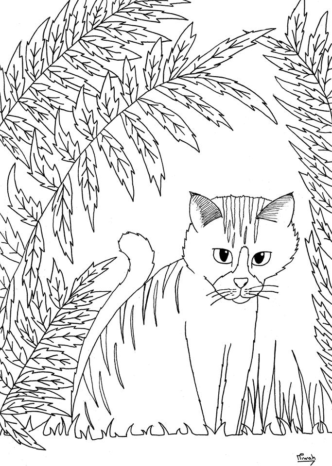 Animaux coloriages difficiles pour adultes coloriage - Coloriages chatons ...