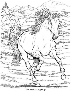 coloriage-adulte-animaux-cheval free to print