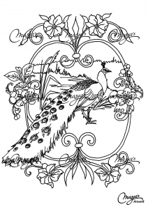 coloriage-adulte-animaux-paon free to print