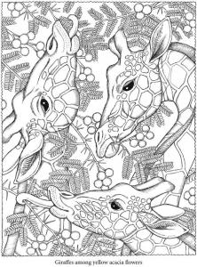 coloriage-adulte-animaux-testes-girafes free to print