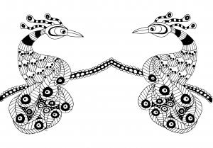 coloriage-deux-oiseau-extraordinaires free to print
