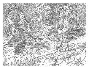 coloriage-difficile-oiseau free to print