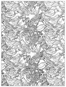 coloriage-nombreux-oiseaux free to print