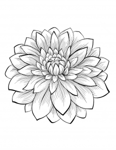 coloriage-adulte-dahlia free to print