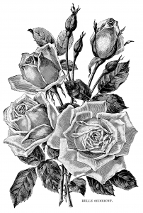 coloriage-adulte-illustration-vintage-roses free to print