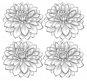 coloriage-adulte-quatre-dahlias free to print