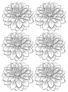 coloriage-adulte-six-dahlias free to print