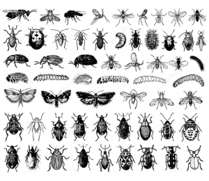 coloriage-difficile-insectes free to print