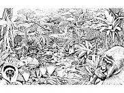 Jungle et Forêt