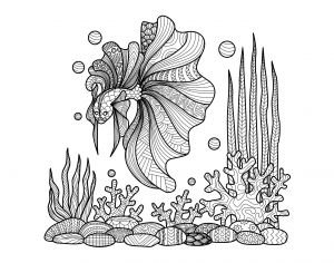 coloriage-adulte-zentangle-poisson-sur-coraux-par-bimdeedee free to print